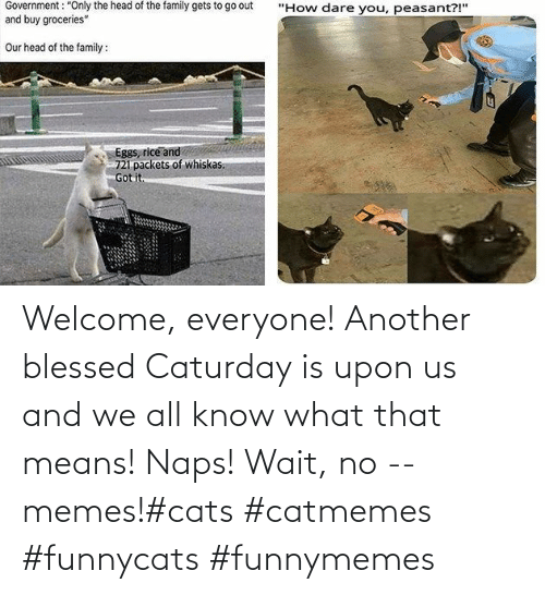 Caturday: Welcome, everyone! Another blessed Caturday is upon us and we all know what that means! Naps! Wait, no -- memes!#cats #catmemes #funnycats #funnymemes