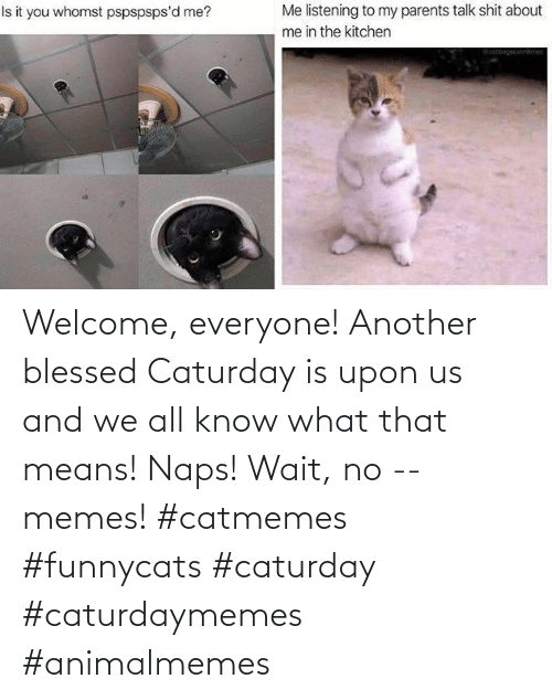 Caturday: Welcome, everyone! Another blessed Caturday is upon us and we all know what that means! Naps! Wait, no -- memes! #catmemes #funnycats #caturday #caturdaymemes #animalmemes