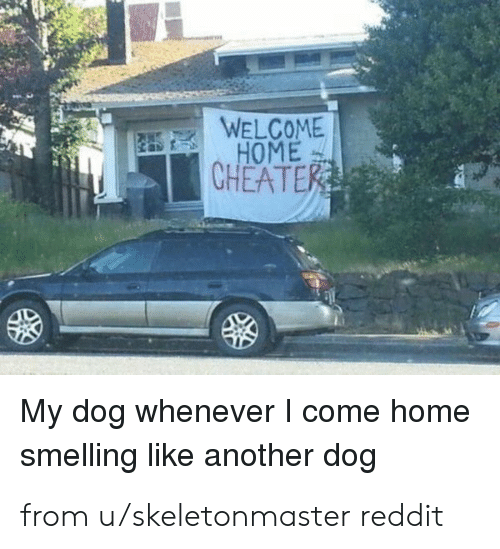 Dank, Reddit, and Home: WELCOME  HOME  CHEATER  My dog whenever I come home  smelling like another dog from u/skeletonmaster reddit