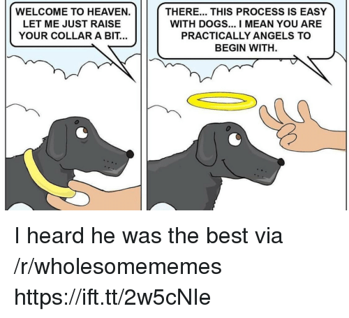 Dogs, Heaven, and Angels: WELCOME TO HEAVEN.  LET ME JUST RAISE  YOUR COLLAR A BIT...  THERE... THIS PROCESS IS EASY  WITH DOGS... I MEAN YOU ARE  PRACTICALLY ANGELS TO  BEGIN WITH. I heard he was the best via /r/wholesomememes https://ift.tt/2w5cNIe