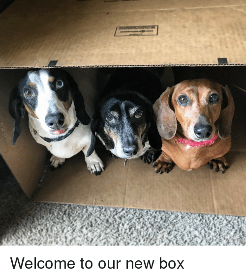Box, New, and  Welcome: Welcome to our new box
