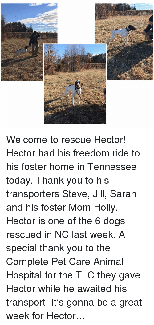 Dogs, Memes, and Thank You: Welcome to rescue Hector! Hector had his freedom ride to his foster home in Tennessee today.  Thank you to his transporters Steve, Jill, Sarah and his foster Mom Holly.  Hector is one of the 6 dogs rescued in NC last week. A special thank you to the Complete Pet Care Animal Hospital for the TLC they gave Hector while he awaited his transport.  It's gonna be a great week for Hector…