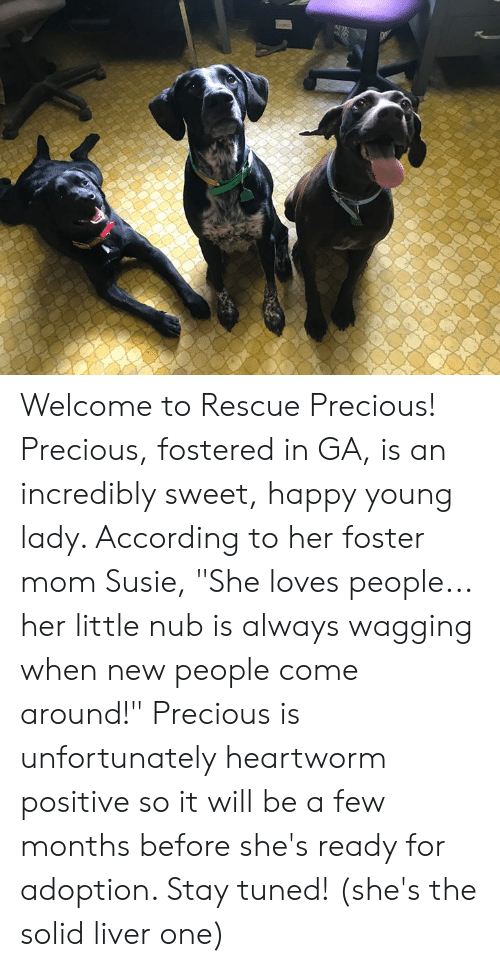 "Memes, Precious, and Happy: Welcome to Rescue Precious!  Precious, fostered in GA, is an incredibly sweet, happy young lady.   According to her foster mom Susie, ""She loves people... her little nub is always wagging when new people come around!""  Precious is unfortunately heartworm positive so it will be a few months before she's ready for adoption.  Stay tuned!  (she's the solid liver one)"