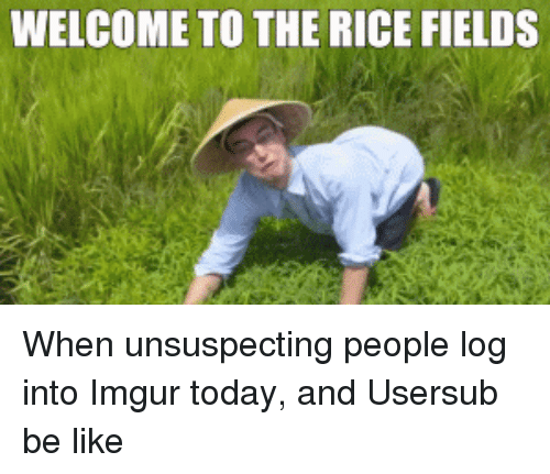 Be Like, Funny, and Imgur: WELCOME TO THE RICE FIELDS When unsuspecting people log into Imgur today, and Usersub be like