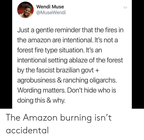 Muse: Wendi Muse  @MuseWendi  Just a gentle reminder that the fires in  the amazon are intentional. It's not a  forest fire type situation. It's an  intentional setting ablaze of the forest  by the fascist brazilian govt +  agrobusiness & ranching oligarchs.  Wording matters. Don't hide who is  doing this & why. The Amazon burning isn't accidental