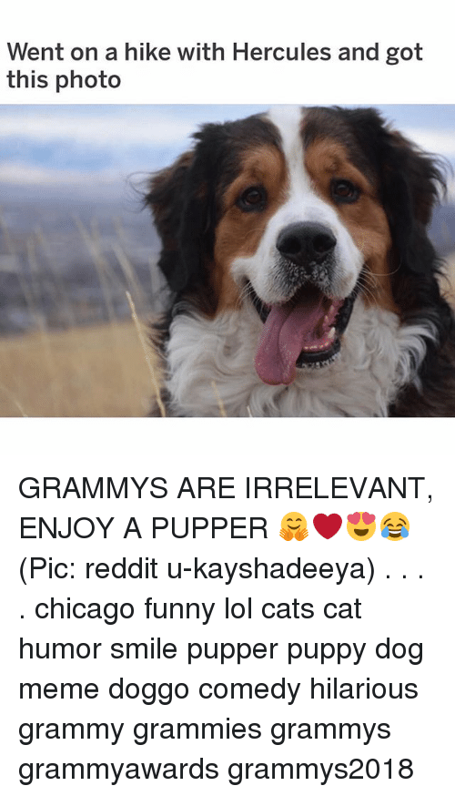 Dog Meme: Went on a hike with Hercules and got  this photo GRAMMYS ARE IRRELEVANT, ENJOY A PUPPER 🤗❤️😍😂 (Pic: reddit u-kayshadeeya) . . . . chicago funny lol cats cat humor smile pupper puppy dog meme doggo comedy hilarious grammy grammies grammys grammyawards grammys2018