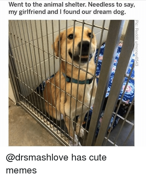cute memes: Went to the animal shelter. Needless to say,  my girltfriend and I found our dream dog.  3 @drsmashlove has cute memes