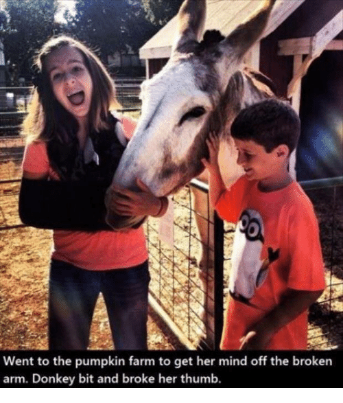 Donkey, Memes, and Pumpkin: Went to the pumpkin farm to get her mind off the broken  arm. Donkey bit and broke her thumb.