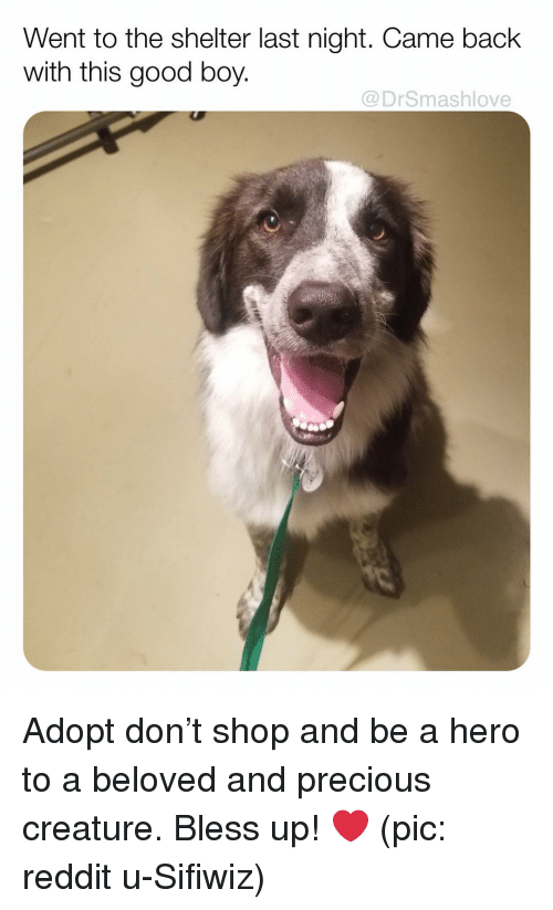 Bless Up, Memes, and Precious: Went to the shelter last night. Came back  with this good boy.  @DrSmashlove Adopt don't shop and be a hero to a beloved and precious creature. Bless up! ❤️ (pic: reddit u-Sifiwiz)