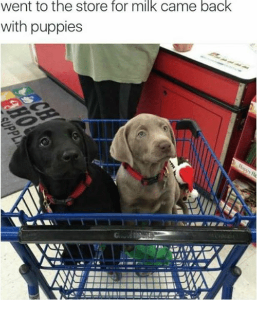 Memes, Puppies, and Puppy: Went to the store for milk came back  with puppies