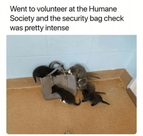 Humane Society, Security, and Check: Went to volunteer at the Humane  Society and the security bag check  was pretty intense