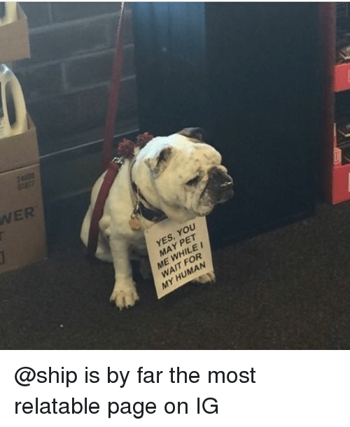 Funny, Relatable, and Page: WER  YES, YOU  MAY PET  ME WHILE  WAIT FOR  MY HUMAN @ship is by far the most relatable page on IG