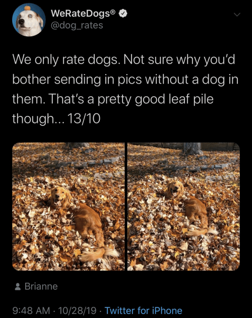 not sure: WeRateDogs®  @dog_rates  We only rate dogs. Not sure why you'd  bother sending in pics without a dog in  them. That's a pretty good leaf pile  though... 13/10  8 Brianne  9:48 AM · 10/28/19 · Twitter for iPhone