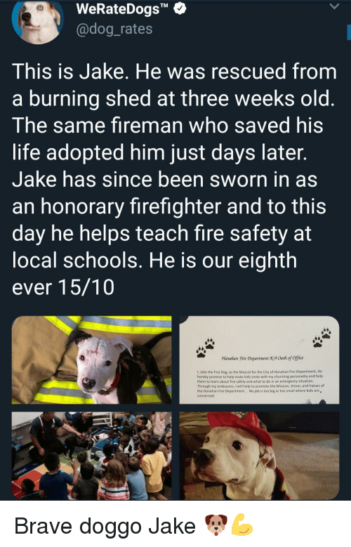 "Fire, Life, and Vision: WeRateDogs""  @dog_rates  TM  This is Jake. He was rescued from  a burning shed at three weeks old  The same fireman who saved his  life adopted him just days later  Jake has since been sworn in as  an honorary firefighter and to this  day he helps teach fire safety at  ocal schools. He is our eighth  ever 15/10  Manahan Fire Department X9 Oath of office  1, Jake the Fire Dog, as the Mascot for the City of Hanahan Fire Department, do  hereby promise to help make kids smile with my charming personality and help  them to learn about fire safety and what to do in an emergency situation  Through my endeavors, I will help to promote the Mission, Vision, and Values of  the Hanahan Fire Department.. No job is too big or too small where kids are  concerned Brave doggo Jake 🐶💪"