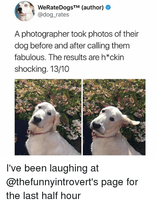 halfs: WeRateDogsTM (author) +  @dog_rates  A photographer took photos of their  dog before and after calling them  fabulous. The results are h*ckin  shocking. 13/10 I've been laughing at @thefunnyintrovert's page for the last half hour