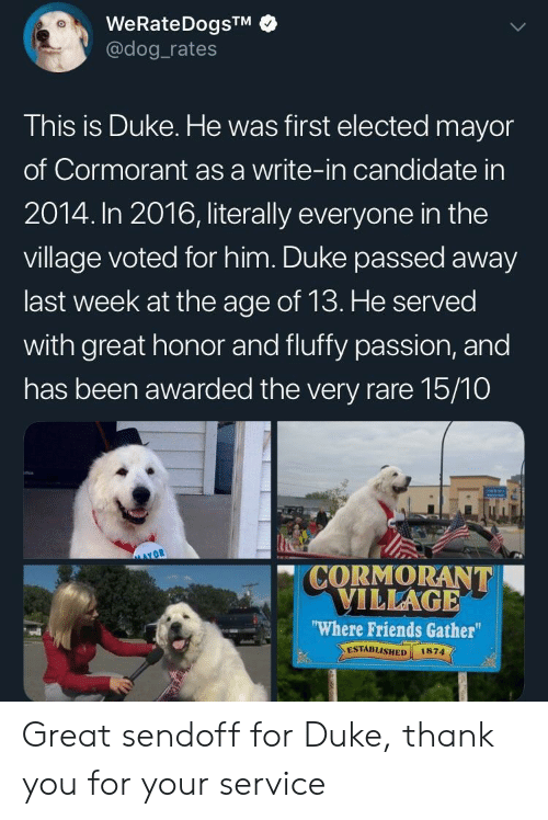 Friends, Thank You, and Duke: WeRateDogsTM  @dog rates  This is Duke. He was first elected mayor  of Cormorant as a write-in candidate in  2014. In 2016, literally everyone in the  village voted for him. Duke passed away  last week at the age of 13. He served  with great honor and fluffy passion, and  has been awarded the very rare 15/10  CORMORANT  VILLAGE  Where Friends Gather  ESTABLISHED 1874  vdl Great sendoff for Duke, thank you for your service