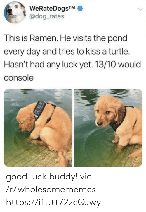 console: WeRateDogsTM  @dog_rates  This is Ramen. He visits the pond  every day and tries to kiss a turtle.  Hasn't had any luck yet. 13/10 would  console good luck buddy! via /r/wholesomememes https://ift.tt/2zcQJwy