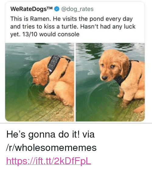 """Ramen, Kiss, and Turtle: WeRateDogsTM@dog_rates  This is Ramen. He visits the pond every day  and tries to kiss a turtle. Hasn't had any luck  yet. 13/10 would console <p>He's gonna do it! via /r/wholesomememes <a href=""""https://ift.tt/2kDfFpL"""">https://ift.tt/2kDfFpL</a></p>"""