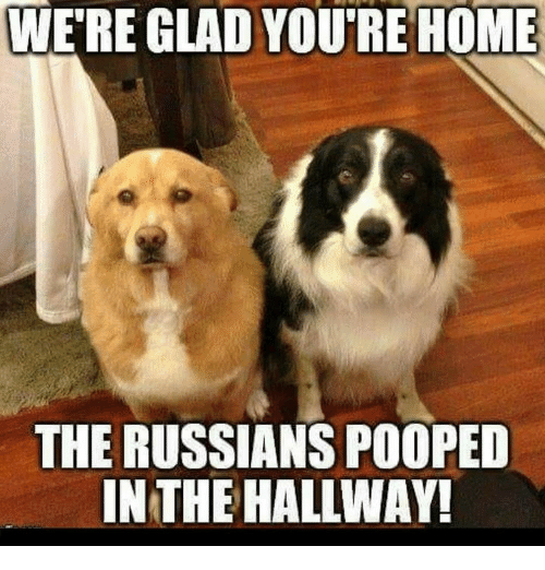 Memes, Home, and 🤖: WE'RE GLAD YOU'RE HOME  THE RUSSIANS POOPED  IN THE HALLWAY