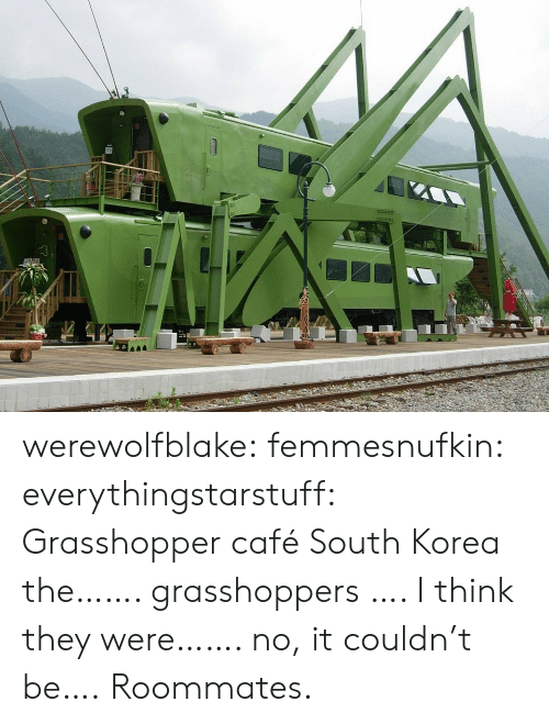South Korea: werewolfblake: femmesnufkin:  everythingstarstuff:   Grasshopper café South Korea the……. grasshoppers …. I think they were……. no, it couldn't be….   Roommates.