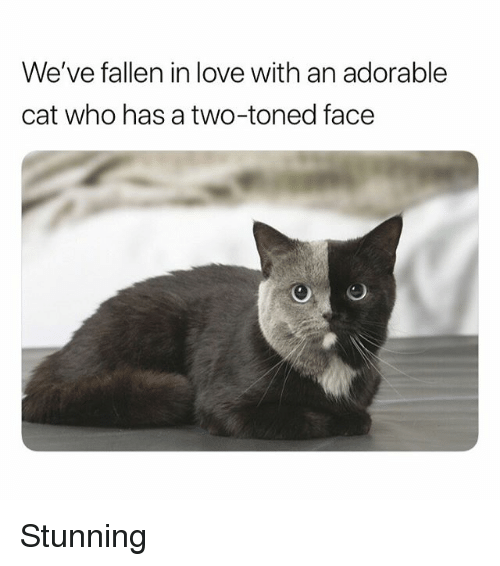 Funny, Love, and Adorable: We've fallen in love with an adorable  cat who has a two-toned face Stunning