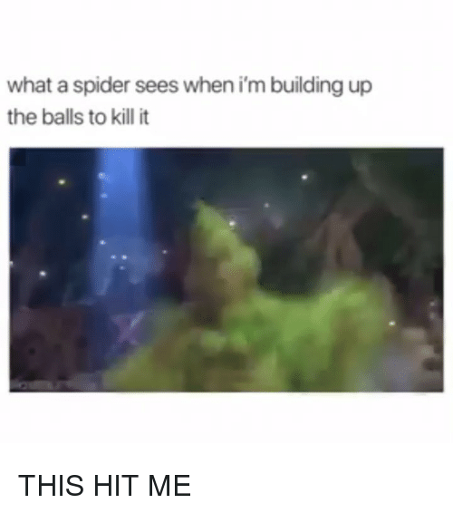 Memes, Spider, and 🤖: what a spider sees when i'm building up  the balls to kill it THIS HIT ME