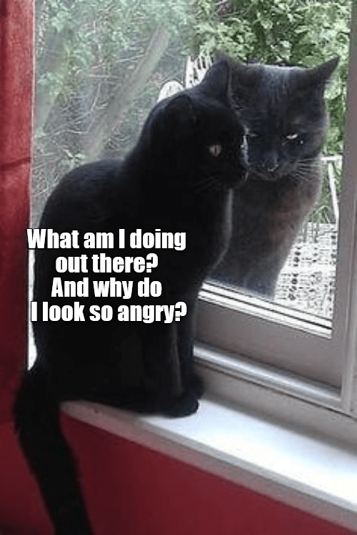 Angry, Why, and What: What am I doing  out there?  And why do  I look so angry?