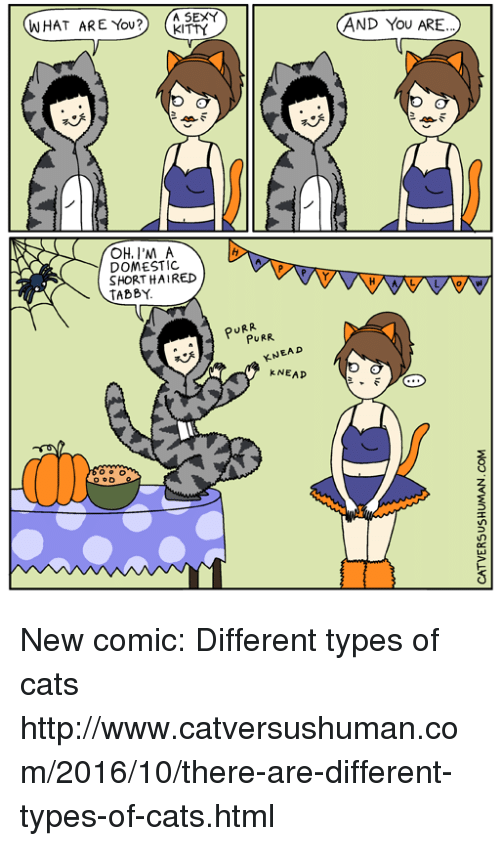 Kitties, Memes, and Sexy: WHAT ARE YOU?  A SEXY  AND YOU ARE..  KITTY  a  I'M A  DOMESTIC  SHORT HAIRED  TABBY.  PURR  PURR  KNEAD  kNEAP  OD New comic: Different types of cats  http://www.catversushuman.com/2016/10/there-are-different-types-of-cats.html