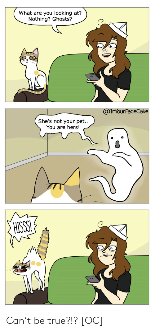 ghosts: What are you looking at?  Nothing? Ghosts?  @InYOur FaceCake  She's not your pet..  You are hers!  HISSS! Can't be true?!? [OC]