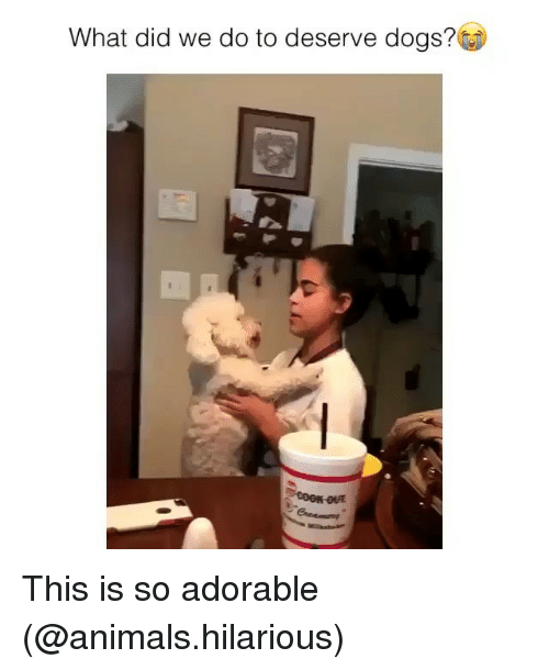 Animals, Dogs, and Funny: What did we do to deserve dogs? This is so adorable (@animals.hilarious)