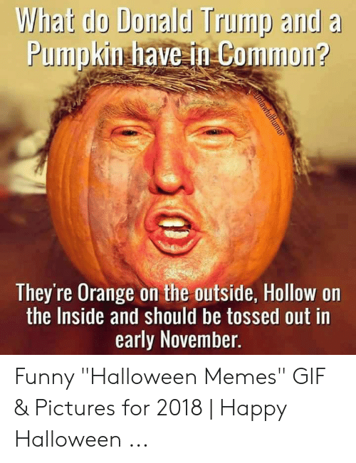 "Gif Pictures: What do Donald Trump and a  Pumpkin have in Common?  They're Orange on the outside, Hollow on  the Inside and should be tossed out in  early November.  tOinlawfulHumor Funny ""Halloween Memes"" GIF & Pictures for 2018 