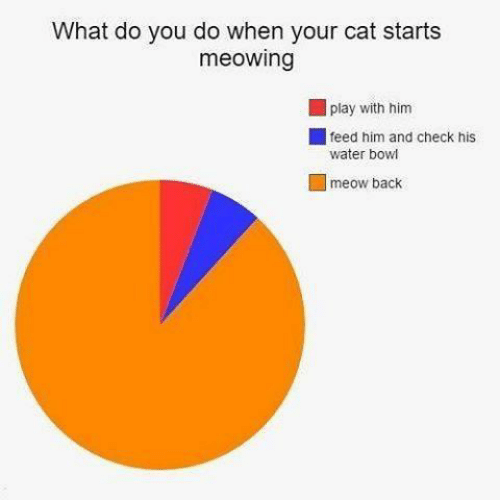 Water, Back, and Bowl: What do you do when your cat starts  meowing  play with him  feed him and check his  water bowl  meow back