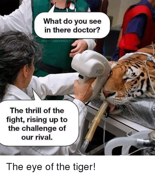 Doctor, Eye of the Tiger, and Tiger: What do you see  in there doctor?  VERYFUNNYPICS.EU  The thrill of the  fight, rising up to  the challenge of  our rival. The eye of the tiger!