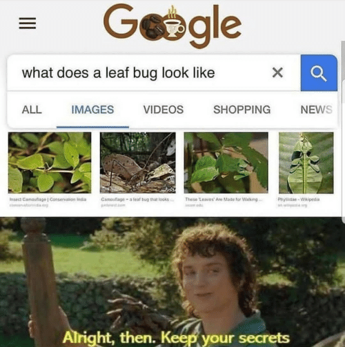 Conservation: what does a leaf bug look like  ALL  IMAGES  VIDEOS  SHOPPING  NEWS  Insed Carnouflage l Conservation inda  Camouflage _ a teaf bug thiat looks..:  These Leaves. A扡Made for wating-  Phrlidae-wkipetia  Alright, then. Keep your secrets
