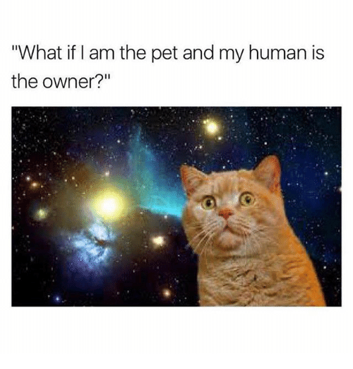 "Memes, 🤖, and Human: ""What if I am the pet and my human is  the owner?"""