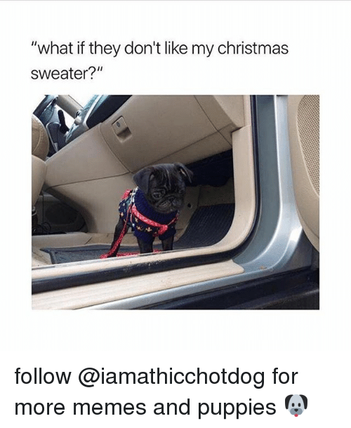 "Christmas, Memes, and Puppies: ""what if they don't like my christmas  sweater?"" follow @iamathicchotdog for more memes and puppies 🐶"