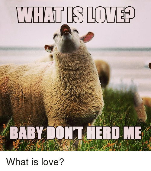 What Is Love Baby Dont Herd Me What Is Love Love Meme On Conservative Memes