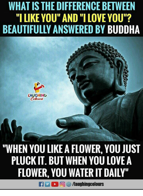 """Love, I Love You, and Buddha: WHAT IS THE DIFFERENCE BETWEEN  """"I LIKE YOU"""" AND """"I LOVE YOU""""?  BEAUTIFULLY ANSWERED BY BUDDHA  LAUGHING  """"WHEN YOU LIKE A FLOWER, YOU JUST  PLUCK IT. BUT WHEN YOU LOVEA  FLOWER, YOU WATER IT DAILY"""""""