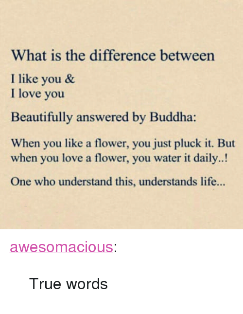 """Life, Love, and True: What is the difference between  I like you &  I love you  Beautifully answered by Buddha:  When you like a flower, you just pluck it. But  when you love a flower, you water it daily..!  One who understand this, understands life... <p><a href=""""http://awesomacious.tumblr.com/post/170585624243/true-words"""" class=""""tumblr_blog"""">awesomacious</a>:</p>  <blockquote><p>True words</p></blockquote>"""