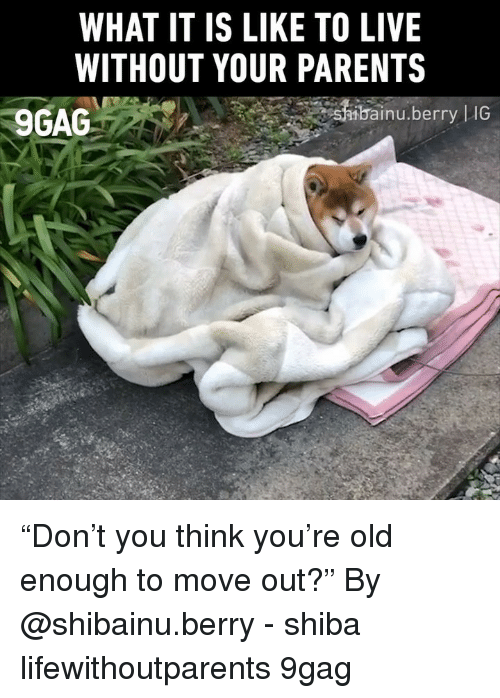"""9gag, Memes, and Parents: WHAT IT IS LIKE TO LIVE  WITHOUT YOUR PARENTS  9GAG  bai  inu.berry 