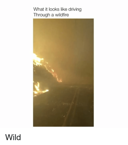 Wild, Relatable, and Wildfire: What it looks like driving  Through a wildfire Wild