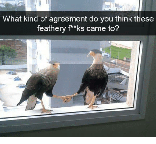 Think, You, and What: What kind of agreement do you think these  feathery f**ks came to?