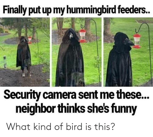 Kind: What kind of bird is this?