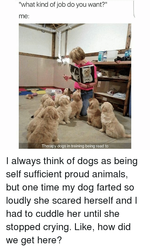 "Dog Farted: ""what kind of job do you want?""  me  G00D  DOG  Therapy dogs in training being read to I always think of dogs as being self sufficient proud animals, but one time my dog farted so loudly she scared herself and I had to cuddle her until she stopped crying. Like, how did we get here?"