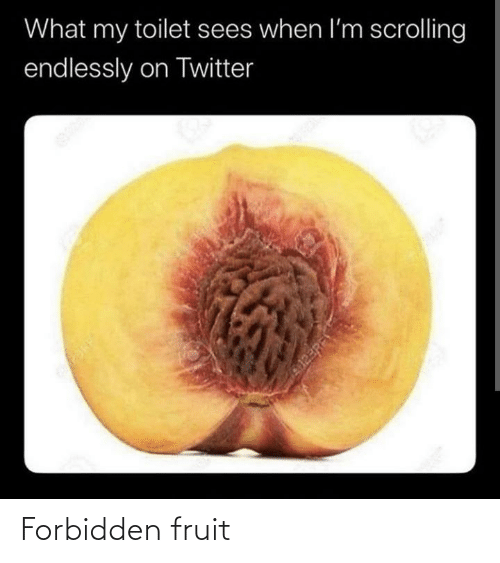 endlessly: What my toilet sees when l'm scrolling  endlessly on Twitter  123RF Forbidden fruit