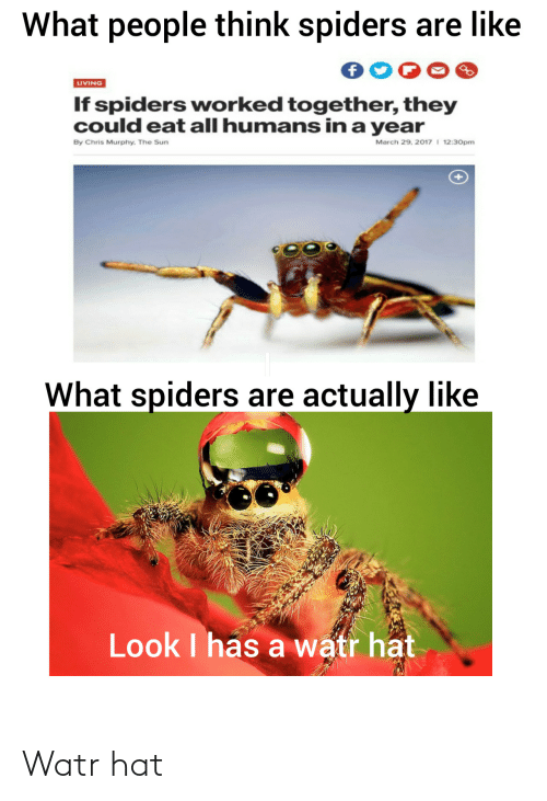 eat: What people think spiders are like  LIVING  If spiders worked together, they  could eat all humans in a year  March 29, 2017 I 12:30pm  By Chris Murphy. The Sun  What spiders are actually like  Look I has a watr hat Watr hat
