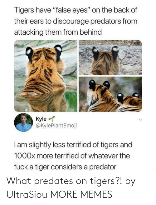 Hilarious: What predates on tigers?! by UltraSiou MORE MEMES