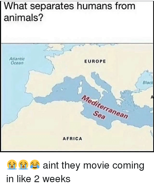 Africa, Animals, and Memes: What separates humans from  animals?  EUROPE  Atlantic  Ocean  Blac  Mediterranean  Sea  AFRICA 😭😭😂 aint they movie coming in like 2 weeks