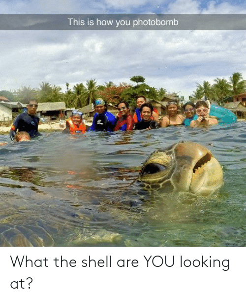 are you: What the shell are YOU looking at?