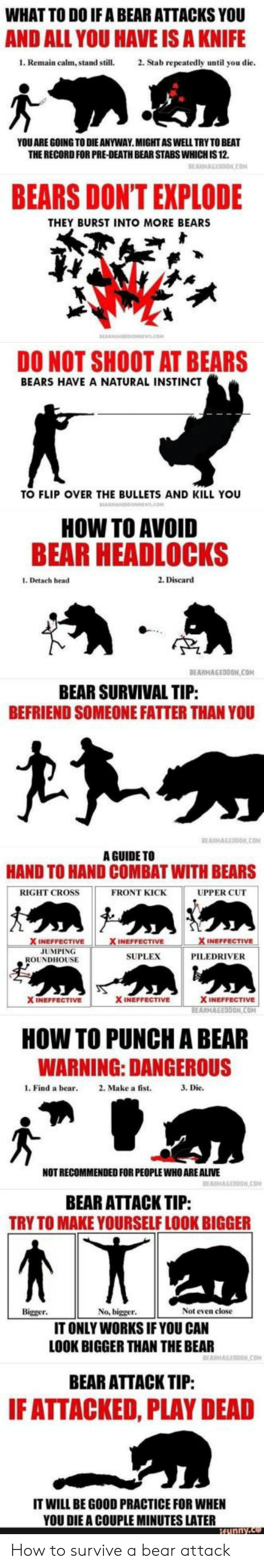 Alive, Head, and Bear: WHAT TO DO IF A BEAR ATTACKS YOU  AND ALL YOU HAVE IS A KNIFE  1. Remain calm, stand still.2. Stab repeatedly until you die  YOU ARE GOING TO DIE ANYWAY.MIGHTASWELL TRY TO BEAT  THE RECORD FOR PRE-DEATH BEAR STABS WHICH IS 12.  BEARS DONT EXPLODE  THEY BURST INTO MORE BEARS  DO NOT SHOOT AT BEARS  BEARS HAVE A NATURAL INSTINCT  TO FLIP OVER THE BULLETS AND KILL YOU  HOW TO AVOID  BEAR HEADLOCKS  1. Detach head  2. Discard  TP  BEARMAGEDDON COM  BEAR SURVIVAL TIP  BEFRIEND SOMEONE FATTER THAN YOU  A GUIDE TO  HAND TO HAND COMBAT WITH BEARS  RIGHT CROSS  FRONT KICK  UPPER CUT  INEFFECTIVE  JUMPING  SUPLEX  PILEDRIVER  ROUNDHOUSE  X INEFFECTIVE  X INEFFECTIVE  ON  HOW TO PUNCH A BEAR  WARNING: DANGEROUS  l. Find a bear 2. Make a fist.  3. Die.  NOT RECOMMENDED FOR PEOPLE WHO ARE ALIVE  BEAR ATTACK TIP:  TRY TO MAKE YOURSELF LOOK BIGGER  Bigger  No, bigger  Not even close  IT ONLY WORKS IF YOU CAN  LOOK BIGGER THAN THE BEAR  BEAR ATTACK TIP:  F ATTACKED, PLAY DEAD  IT WILL BE GOOD PRACTICE FOR WHEN  YOU DIE A COUPLE MINUTES LATER How to survive a bear attack